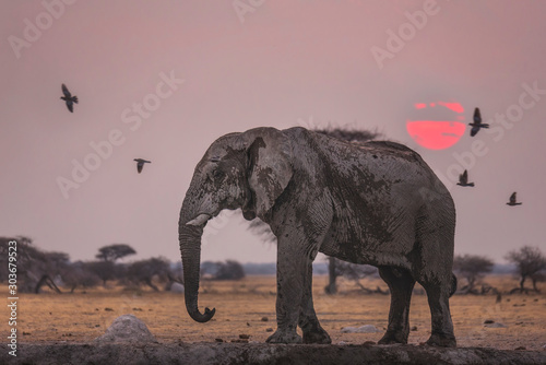 Nxai Sunset Canvas Print