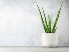 Aloe Vera In A Flowerpot On Gr...