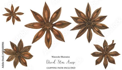 Fototapeta Dried Star Anise flowers, watercolor illustration obraz