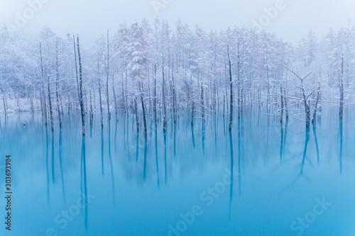 冬の青い池 Canvas Print