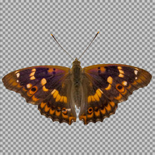 Butterfly Isolated On A Transp...