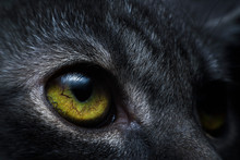 The Cat Eyes That Are Interest...