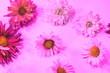 Leinwandbild Motiv flowers on a colored tinted background.