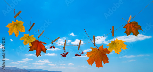 Autumn composition with maple leaves suspended on clothespin, background with bl Canvas Print