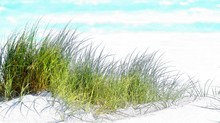 Landscape With The Atlantic Ocean And Dune Grass