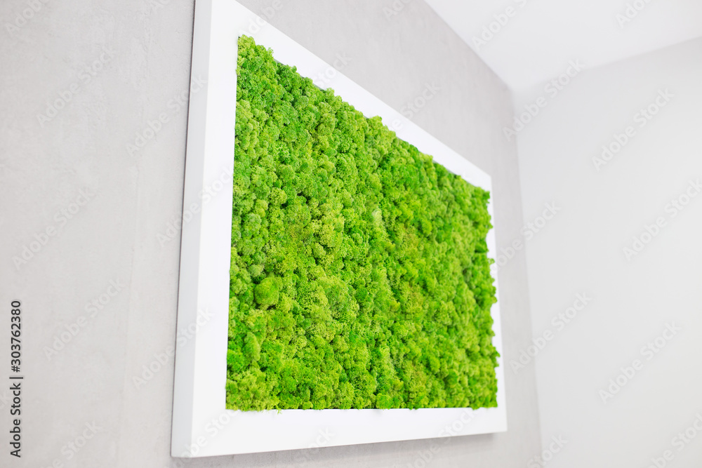 Fototapety, obrazy: Green moss on the wall in the form of a picture. Beautiful white frame for a picture. Ecology.
