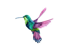 Watercolor Flying Hummingbird