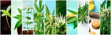 Cannabis Collage. Many Photos ...