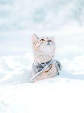 Cute Red Cat Sitting In Snowdrift In Winter And Looking Up.