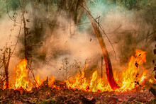 Amazon Rain Forest Fire Disast...
