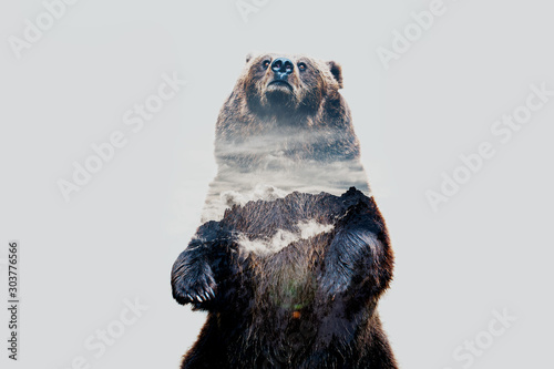 Obraz Minimal style double exposure with a bear and misty mountains - fototapety do salonu