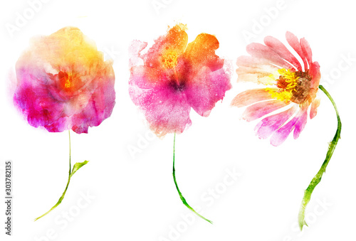 Watercolor flowers , isolated on white background - 303782135
