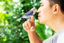 Man Kissing Lovebird Sitting On Finger On Blurred Green Nature Background