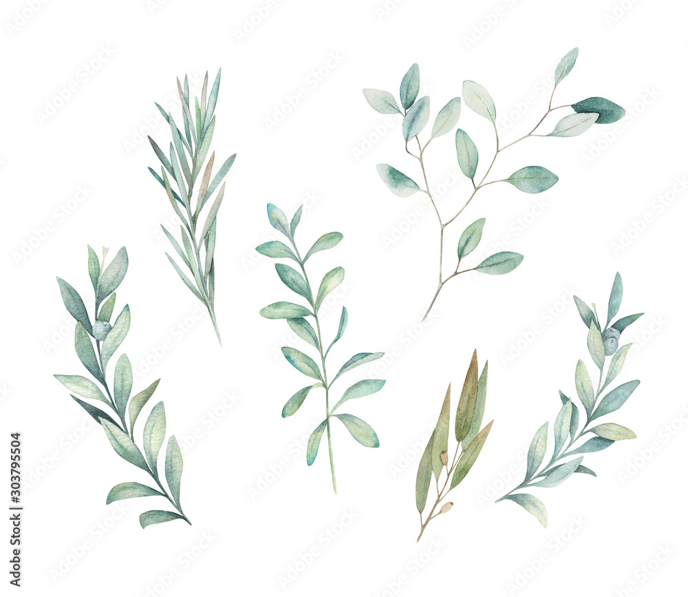 Fototapeta Watercolor floral greenery set with eucalyptus, rosemary and olive branch on white background. Hand drawn isolated  illustration. Wedding design