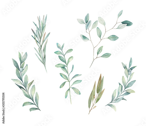 Fototapeta Watercolor floral greenery set with eucalyptus, rosemary and olive branch on white background. Hand drawn isolated  illustration. Wedding design obraz