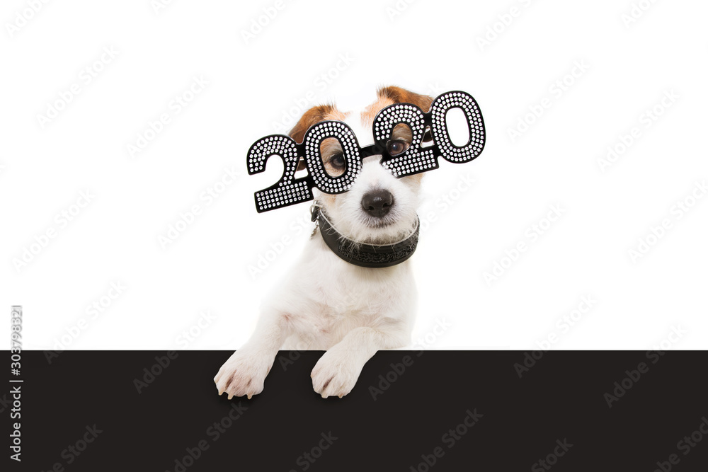 Fototapeta dog new year with paws over black edge. wearing  glasses with the inscription