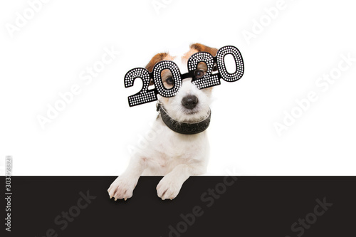 Photo  dog new year with paws over black edge