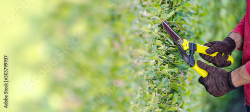 Photographie Pruning of ornamental trees at home in morning