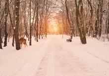 Winter Vibes .