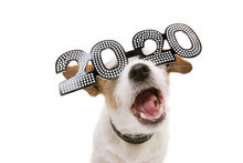 Funny New Year Dog Wearing 202...
