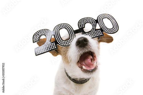 Foto  Funny new year dog wearing 2020 text glasses