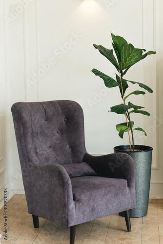 Fototapeta Stylish comfortable chair near white wall, next to a green plant, space for text. Interior design obraz na płótnie