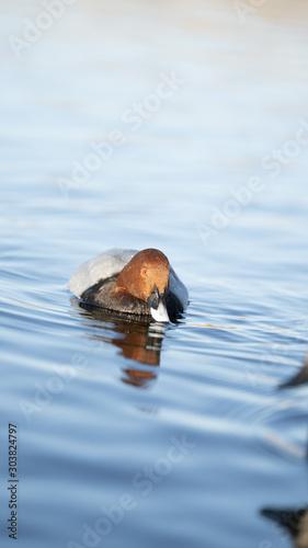 Obraz na plátne foto dell'oasi del wwf di burano