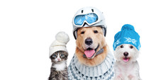 Pets Wearing Winter Accessorie...