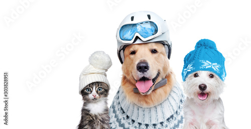 Pets wearing winter accessories isolated on white