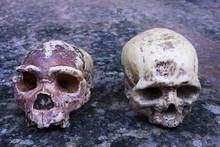 Neanderthal Versus Homo Sapiens
