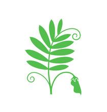 Lentil Logo. Isolated Lentil O...
