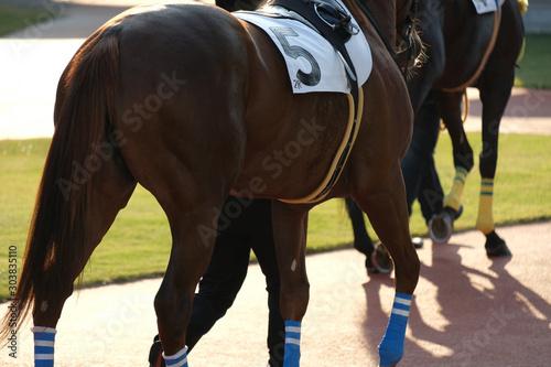 the scene of horse race in Japan Fototapet