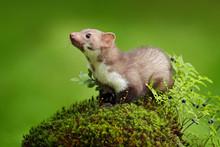 Beautiful Cute Forest Animal. ...