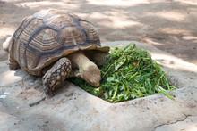Turtle Eating Vegetables In Zoo