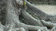 A Closeup Shot Of A Grey-belli...