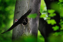 Woodpecker With Chick In The N...