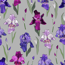 Floral Seamless Pattern With Multicolored Irises On A Gray Background. Purple, Violet, Pink Flowers. For Your Design, Textile. Vector Stock Illustration.