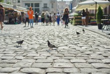Gray Pigeons On The Cobblestone Street In Old City, Background Walking People