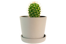 Small Potted Cactus Plant Isol...