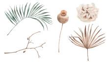 Flowers Watercolour Plant