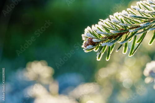 Fotografia  A fir branch with small fir cones covered with white ice crystals of hoar frost is back lit by the morning sun in winter