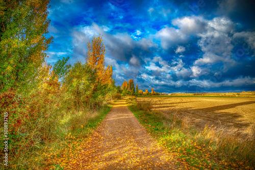 Photo campo en otoño con árboles y flores brotando