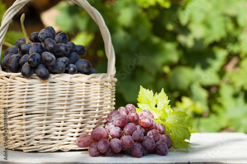 Fototapeta  Colorful grapes