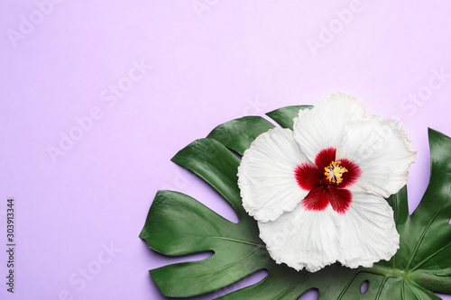 Pinturas sobre lienzo  Beautiful tropical hibiscus flower and monstera leaf on violet background, flat lay