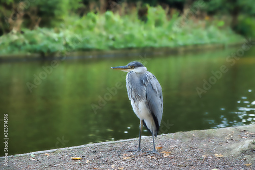 Birl in calm next to the river Canvas Print