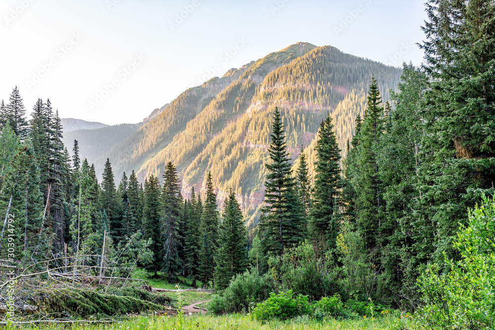 Fototapety, obrazy: Coniferous pine trees on trail to Ice lake in Silverton, Colorado in August 2019 summer morning sunrise green valley and peak