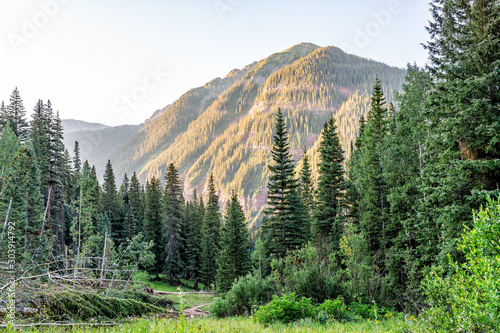 Coniferous pine trees on trail to Ice lake in Silverton, Colorado in August 2019 Fototapete