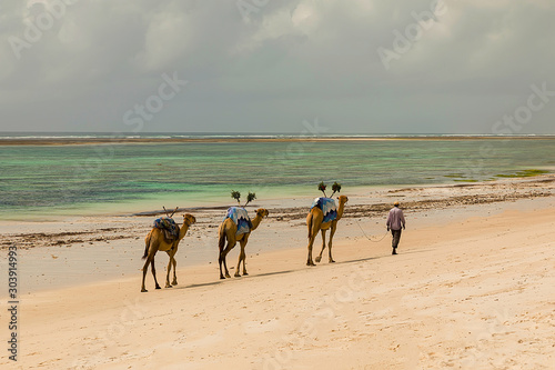 Valokuvatapetti Diani, Mombasa, Kenya, Afrika oktober 13, 2019 An African camel driver leads a small caravan against the background of palm trees along the ocean