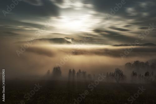 Obraz fog - fototapety do salonu