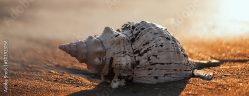 Fotografía Sea shell on sand as background.